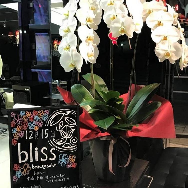beauty salon bliss